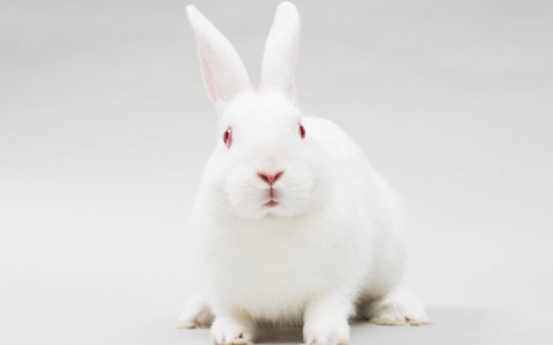 bioterio-conejos-insibio