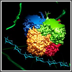 plegado-y-agregacion-de-proteinas