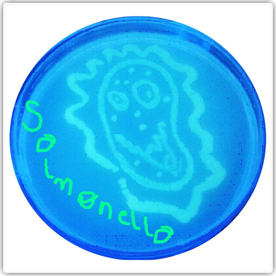 insibio-salmonella-typhi