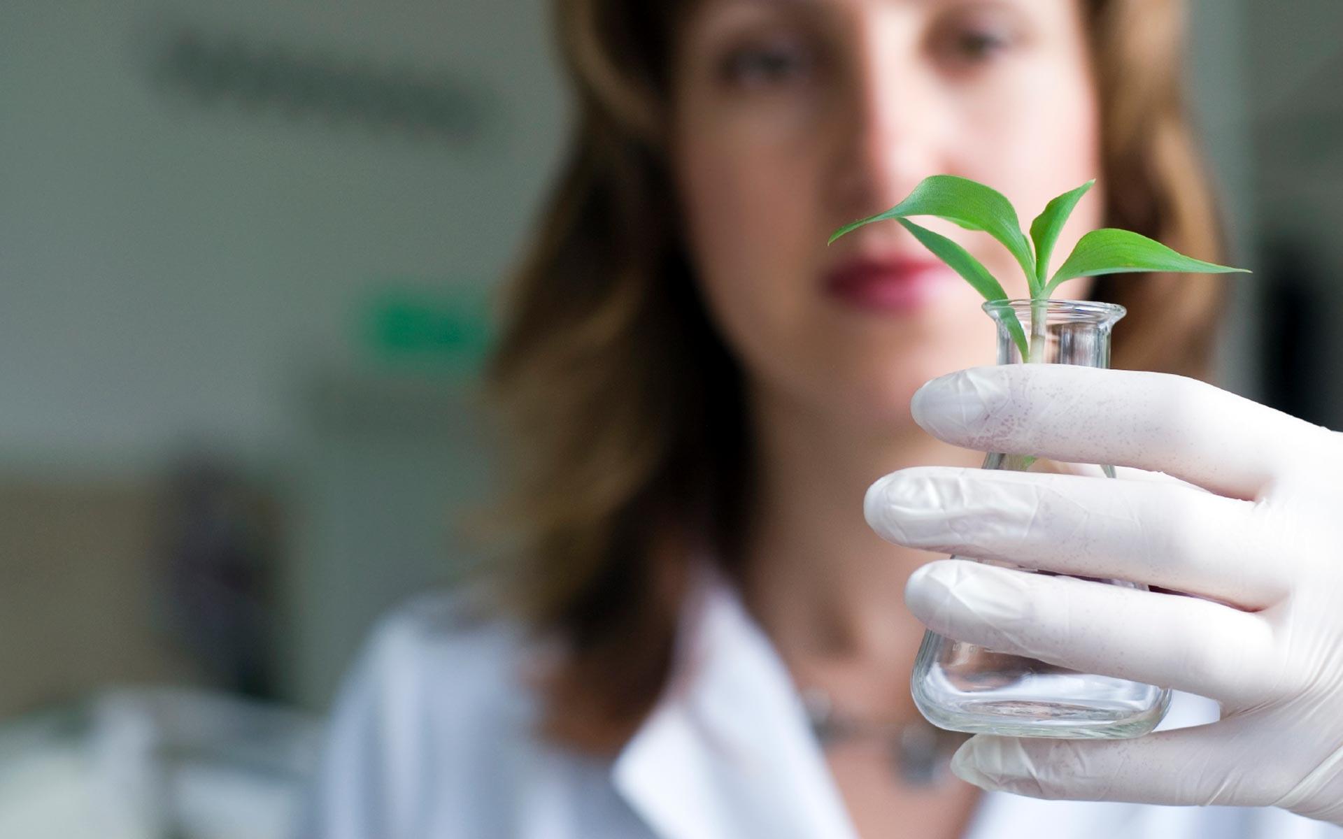 conservation-de-vegetales