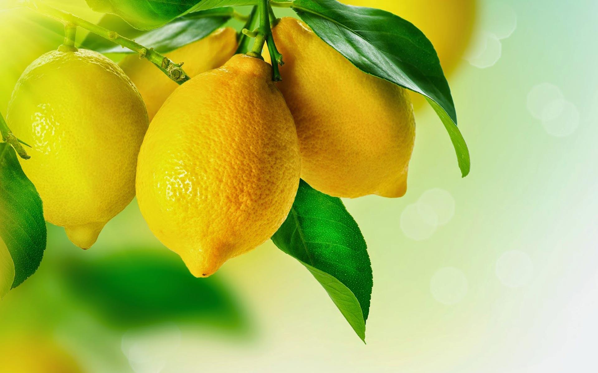 insibio-funguicidas-limones