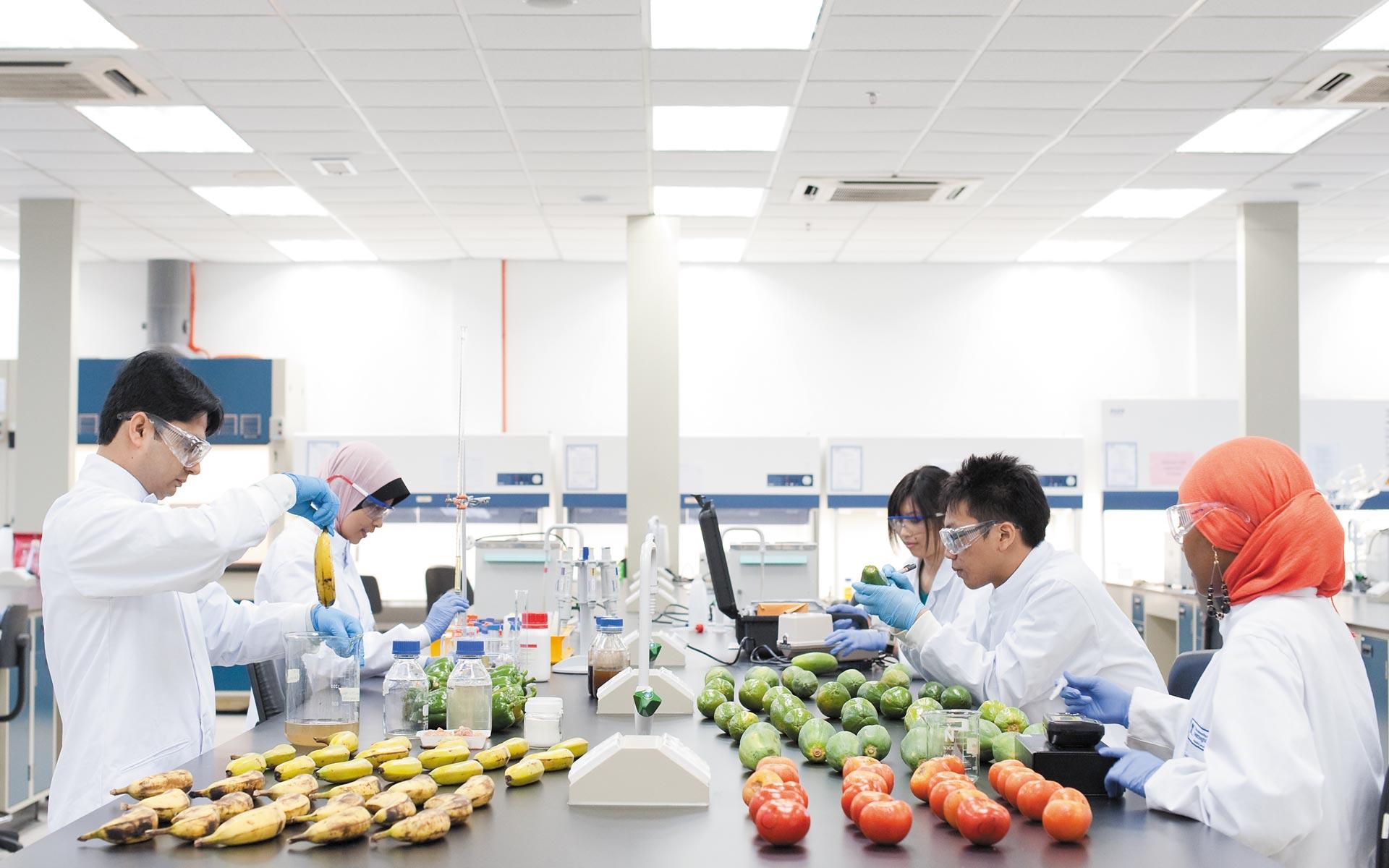 insibio-laboratorio-de-alimentos