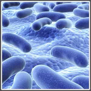 insibio-probiotics