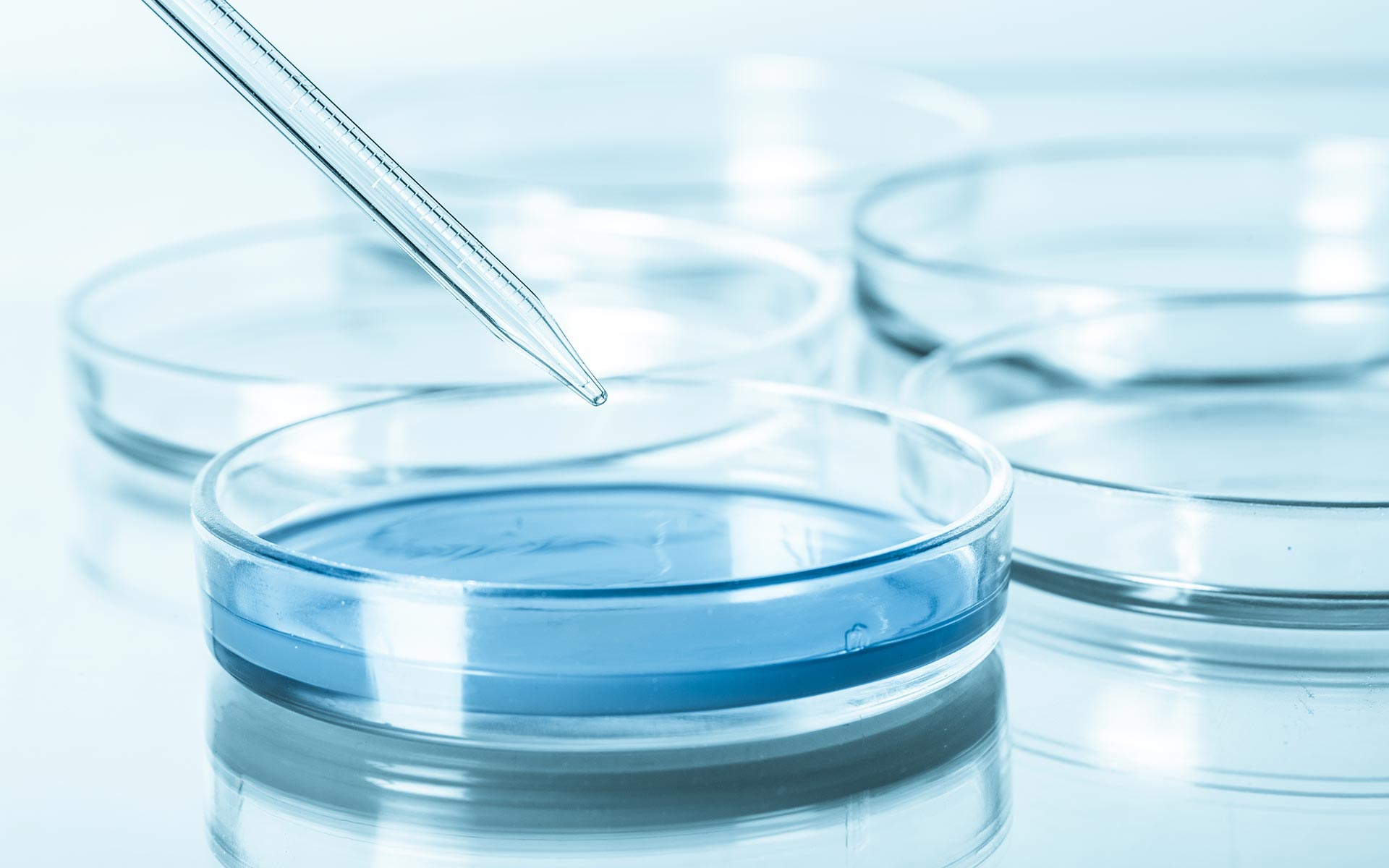 insibio-stan-cultivo-celular